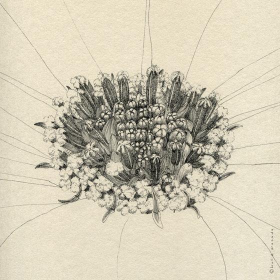 Les dessins détaillés et élégants de Broll & Prascida