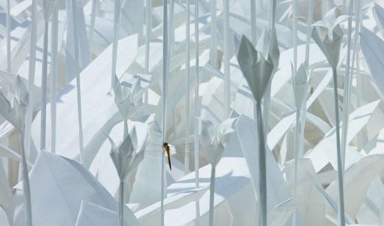 Paper Garden by Anouk Vogel