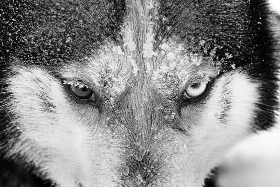 Les magnifiques photos d'Antti Viitala