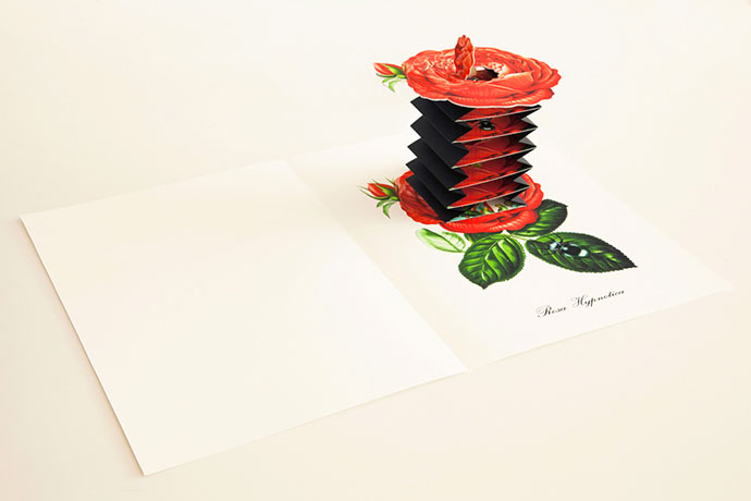 Botany illustrations and pop-up by Bozka