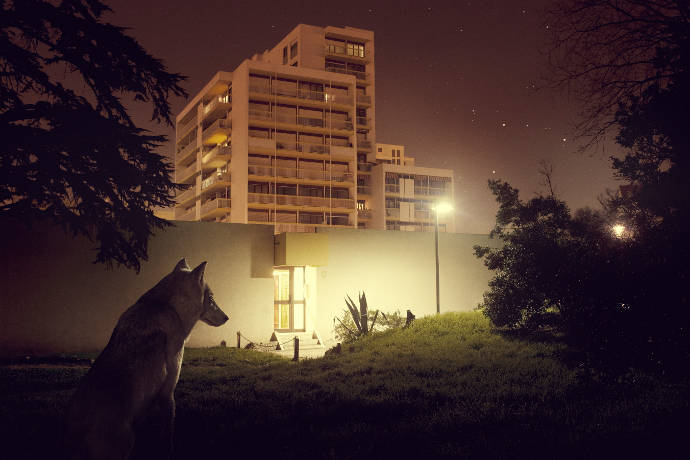 Animal lost in cities by photographer Samuel Guigues