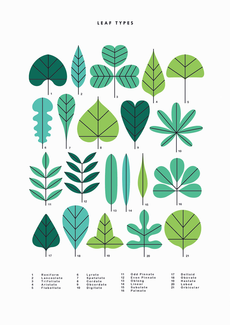 Simple natural illustrations by Sarah Abbott