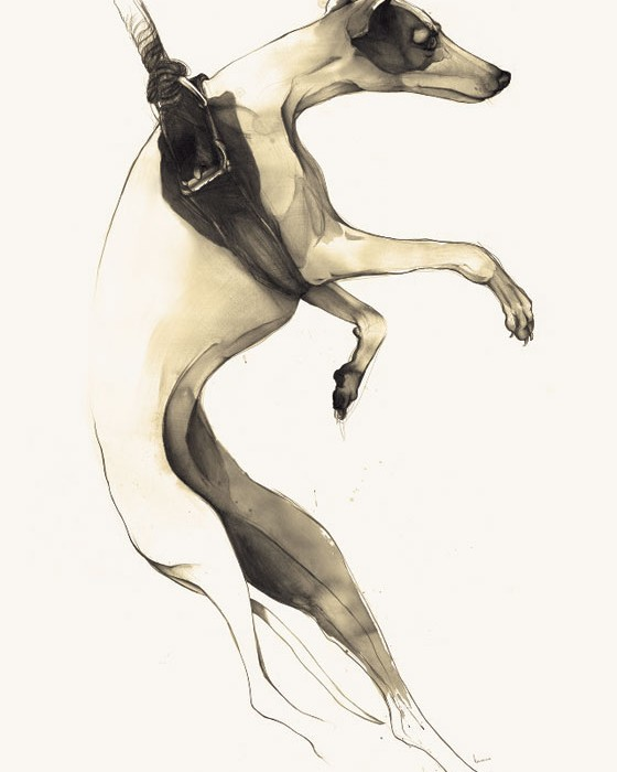 dog drawing by Kareena Zerefos